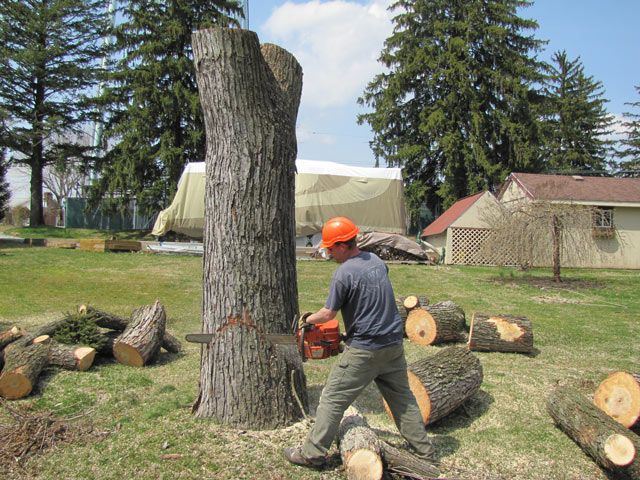 Various Tree Stump Removal Methods